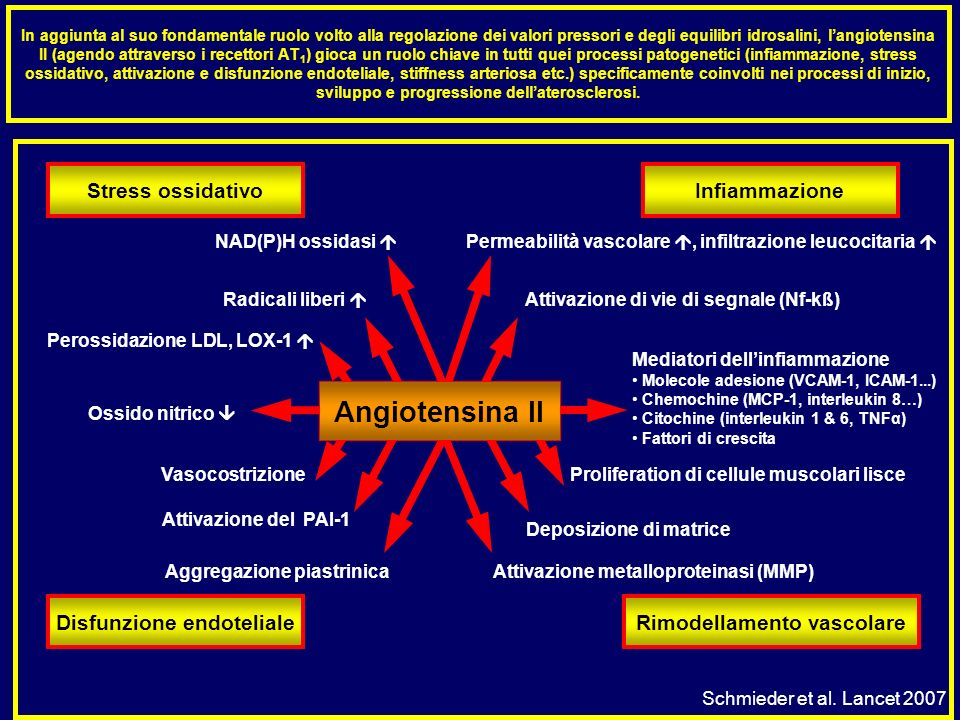Disfunzione endoteliale Rimodellamento vascolare