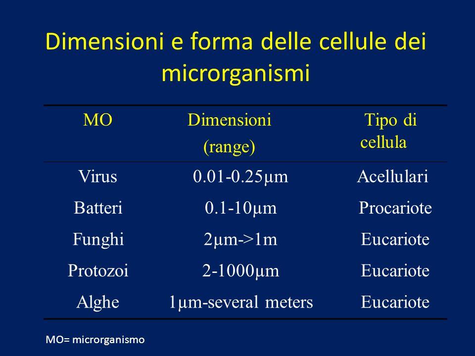 Dimensioni e forma delle cellule dei microrganismi