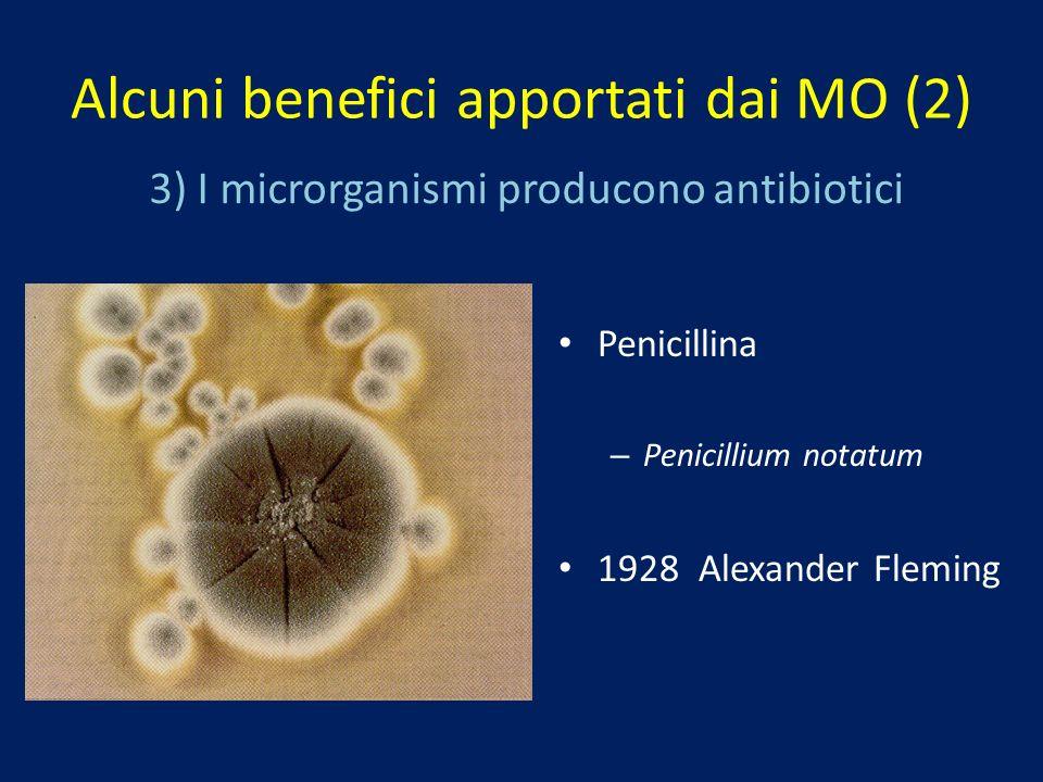 3) I microrganismi producono antibiotici