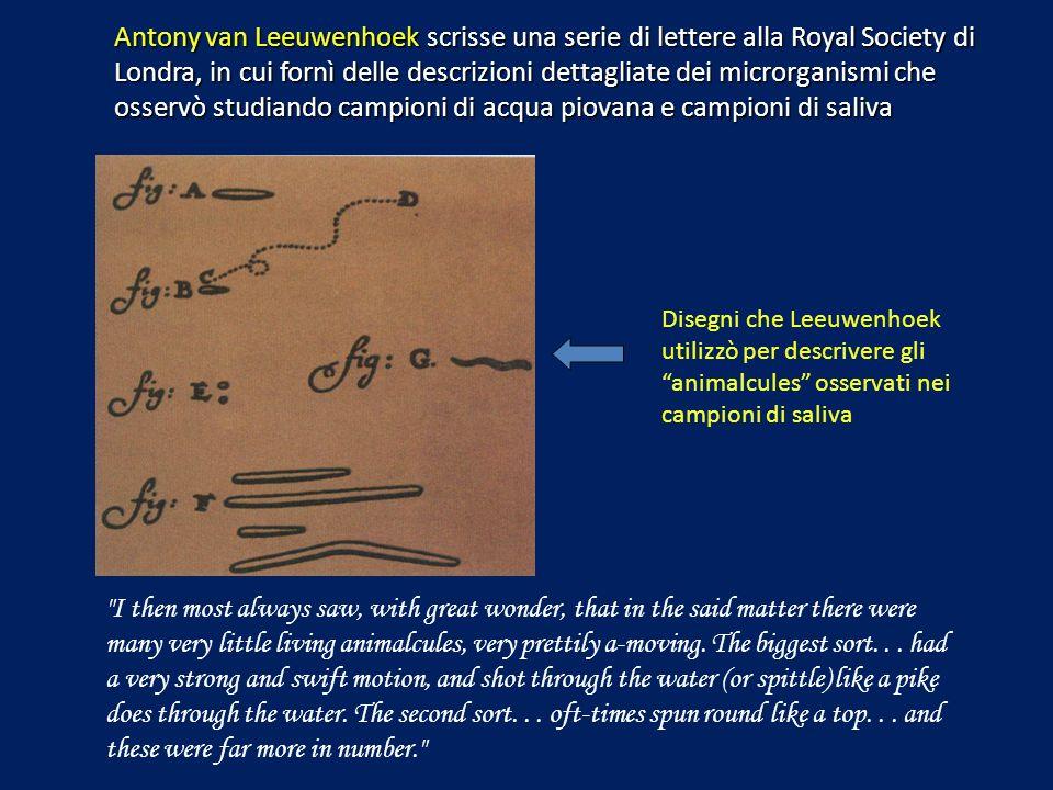 Antony van Leeuwenhoek scrisse una serie di lettere alla Royal Society di Londra, in cui fornì delle descrizioni dettagliate dei microrganismi che osservò studiando campioni di acqua piovana e campioni di saliva