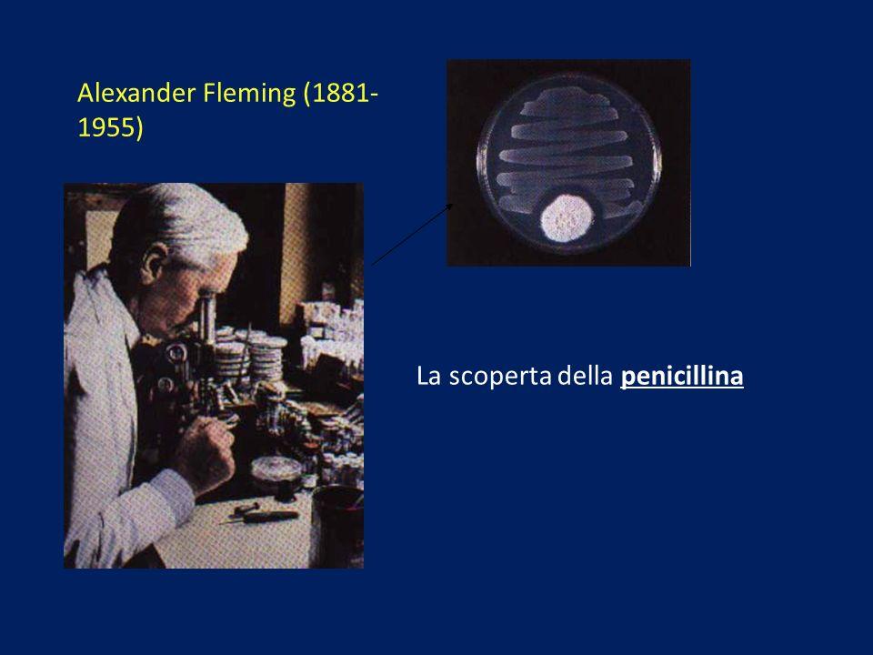 Alexander Fleming (1881-1955) La scoperta della penicillina