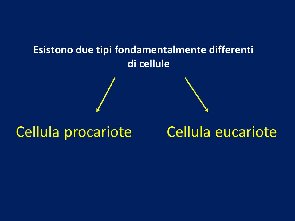 Esistono due tipi fondamentalmente differenti di cellule