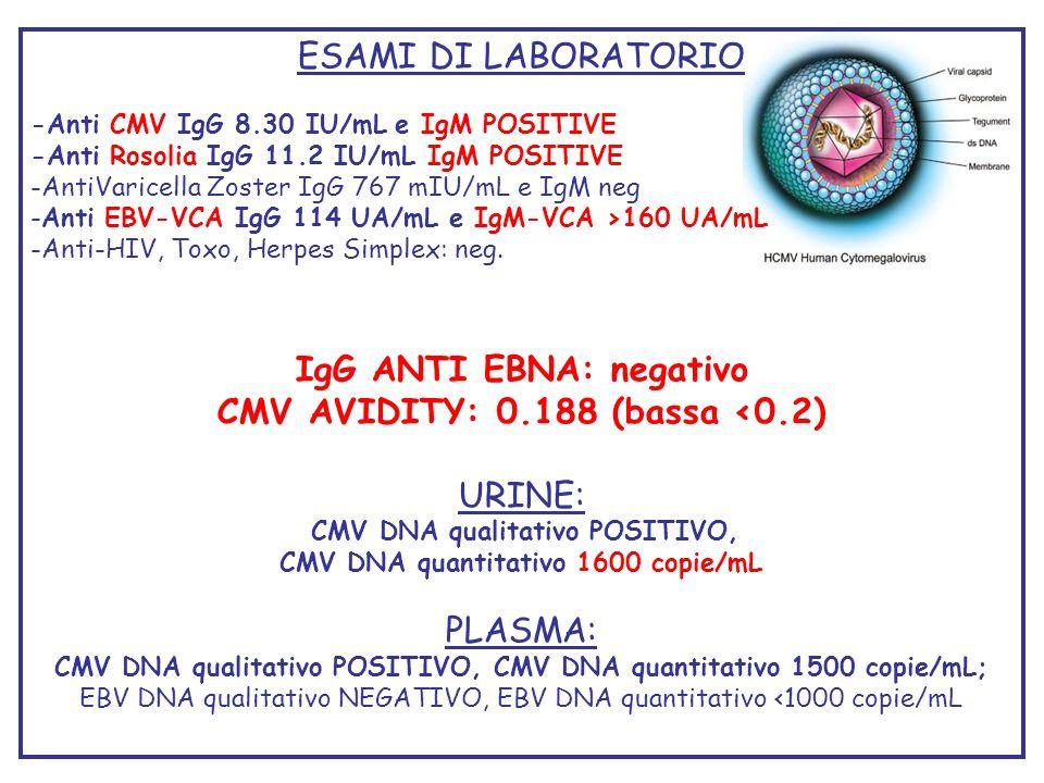 IgG ANTI EBNA: negativo CMV AVIDITY: 0.188 (bassa <0.2)