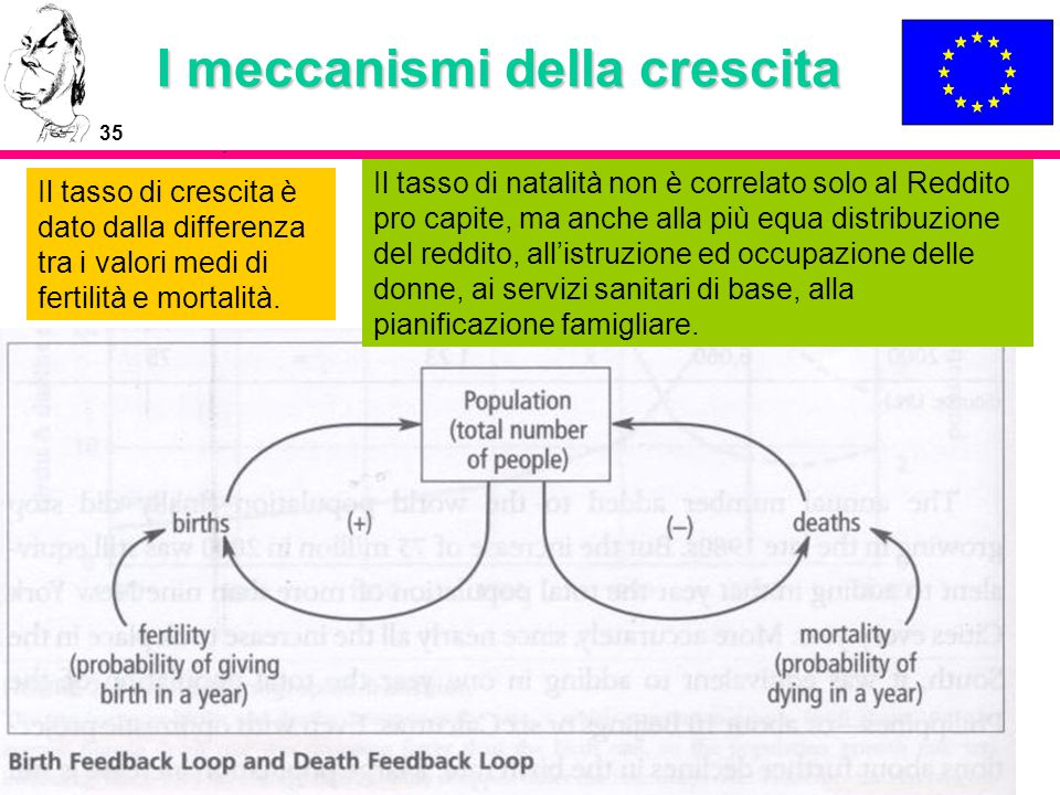 I meccanismi della crescita
