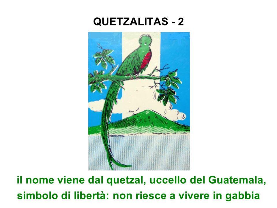 QUETZALITAS - 2il nome viene dal quetzal, uccello del Guatemala, simbolo di libertà: non riesce a vivere in gabbia