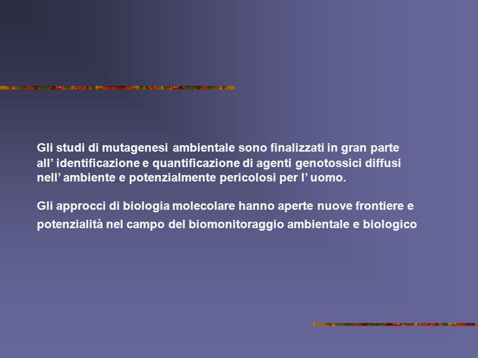 Gli studi di mutagenesi ambientale sono finalizzati in gran parte all' identificazione e quantificazione di agenti genotossici diffusi nell' ambiente e potenzialmente pericolosi per l' uomo.