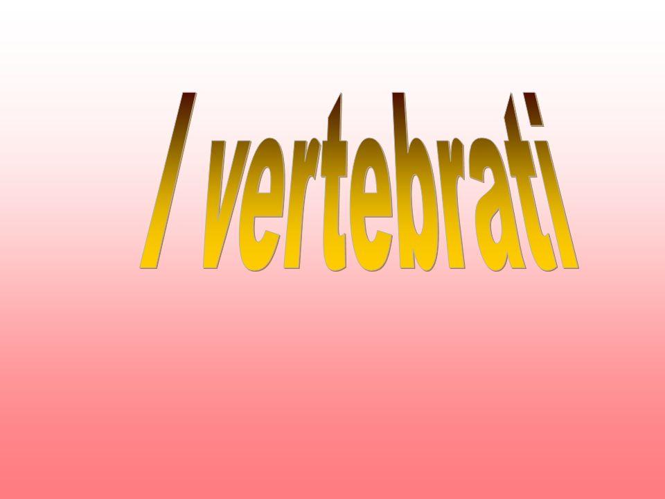 I vertebrati