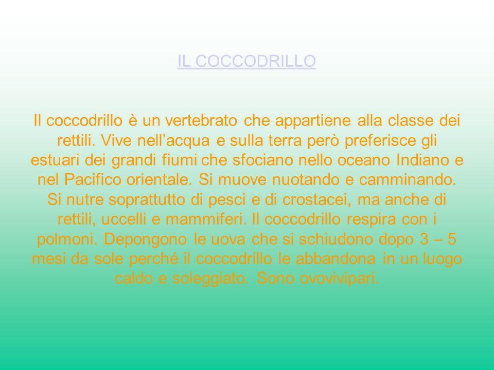 IL COCCODRILLO Il coccodrillo è un vertebrato che appartiene alla classe dei rettili.