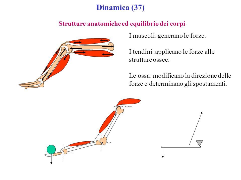 Dinamica (37) Strutture anatomiche ed equilibrio dei corpi