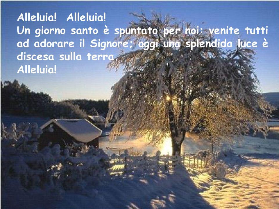 Alleluia! Alleluia! Un giorno santo è spuntato per noi: venite tutti ad adorare il Signore; oggi una splendida luce è discesa sulla terra.