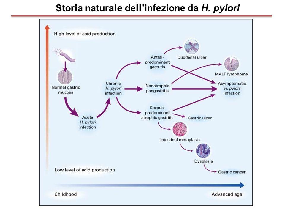Storia naturale dell'infezione da H. pylori
