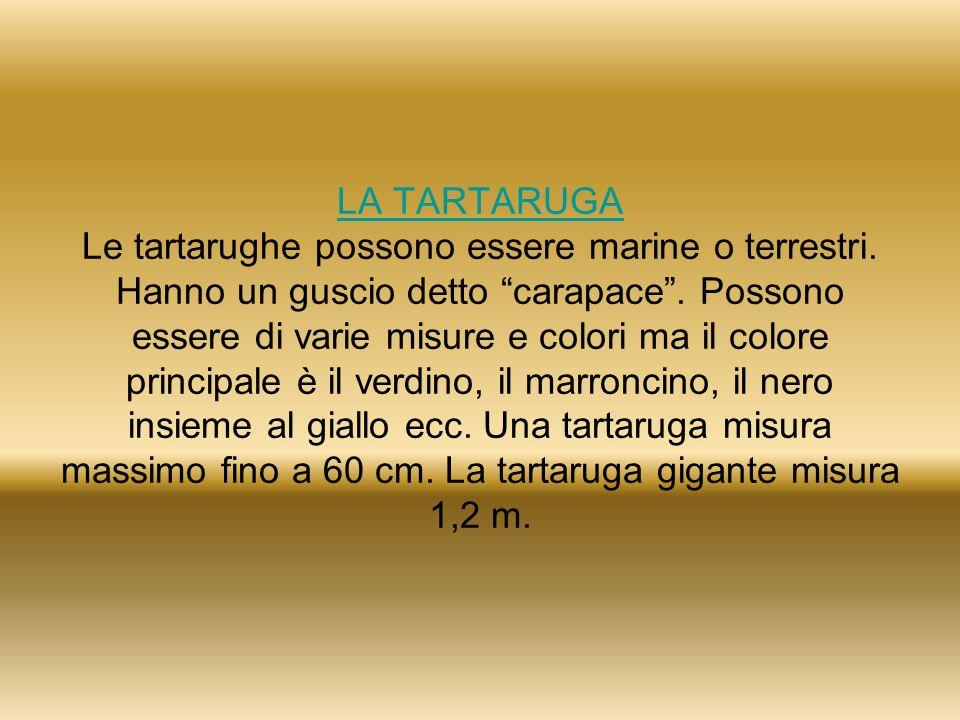LA TARTARUGA Le tartarughe possono essere marine o terrestri
