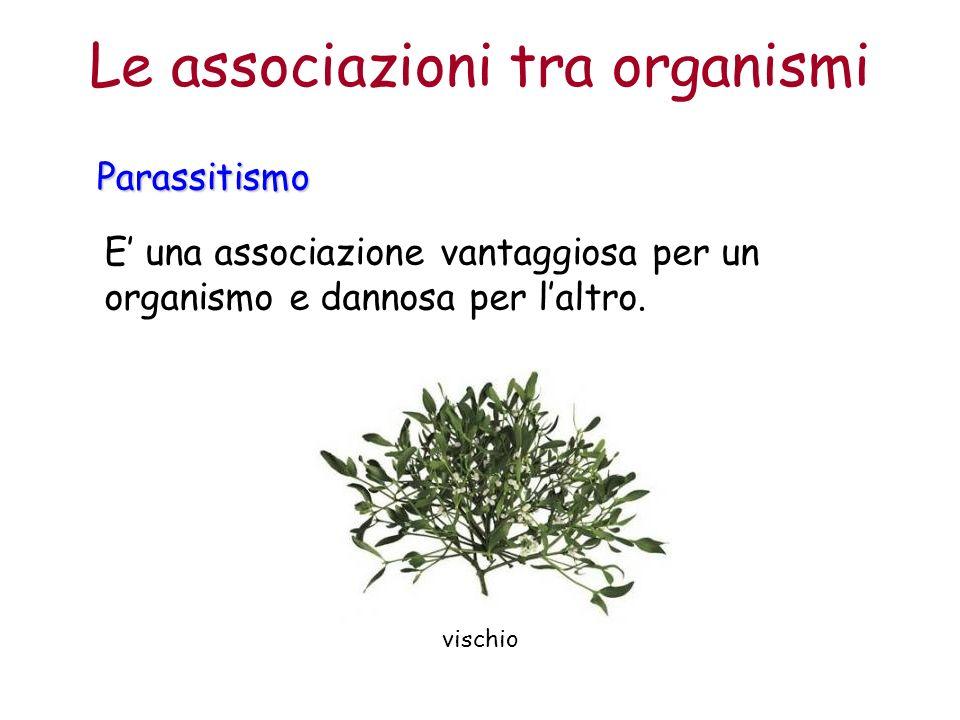 Le associazioni tra organismi