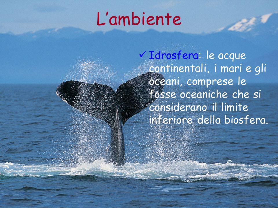 L'ambiente Idrosfera: le acque continentali, i mari e gli oceani, comprese le fosse oceaniche che si considerano il limite inferiore della biosfera.