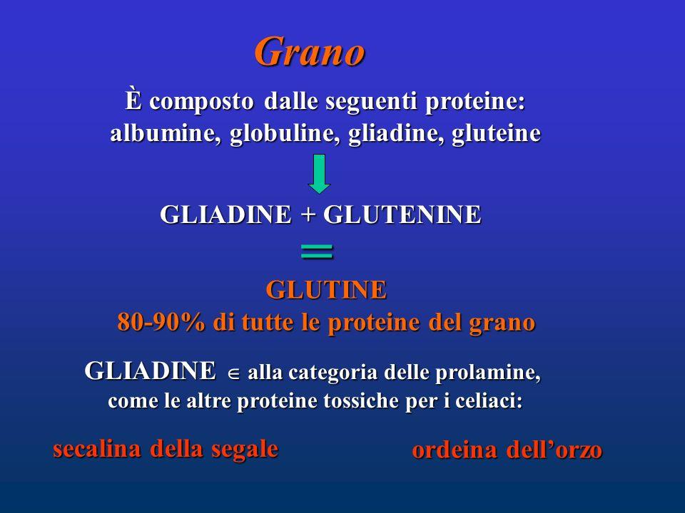 = Grano È composto dalle seguenti proteine: