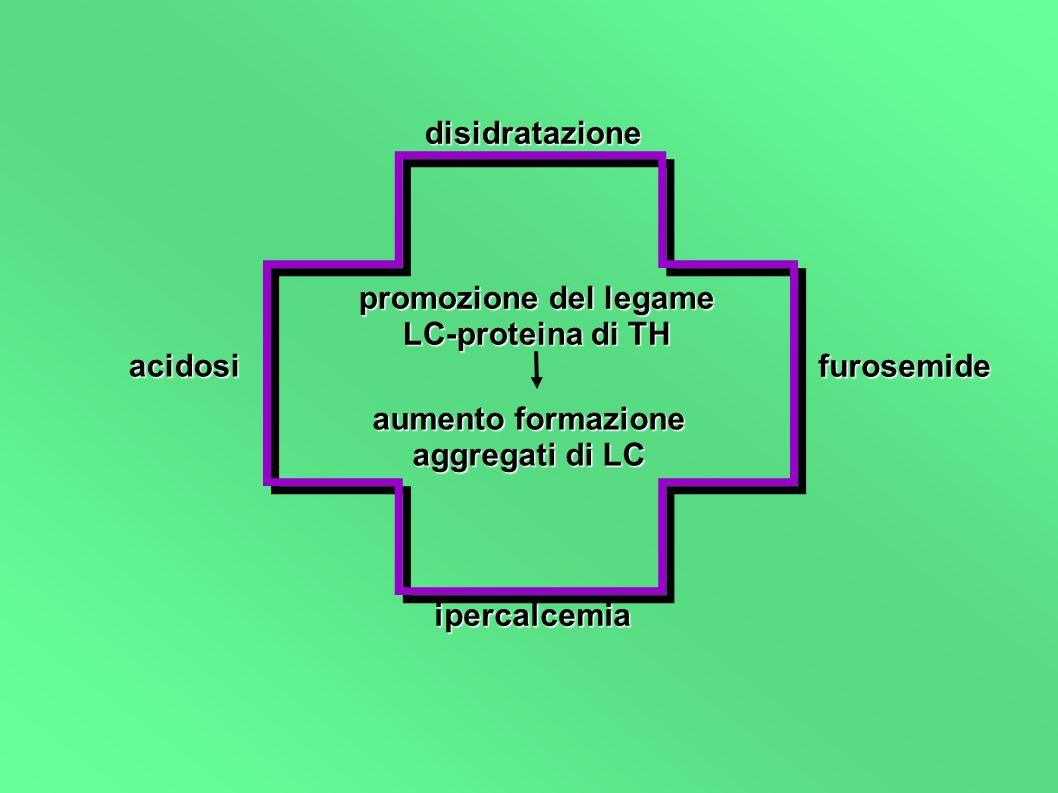 promozione del legame LC-proteina di TH