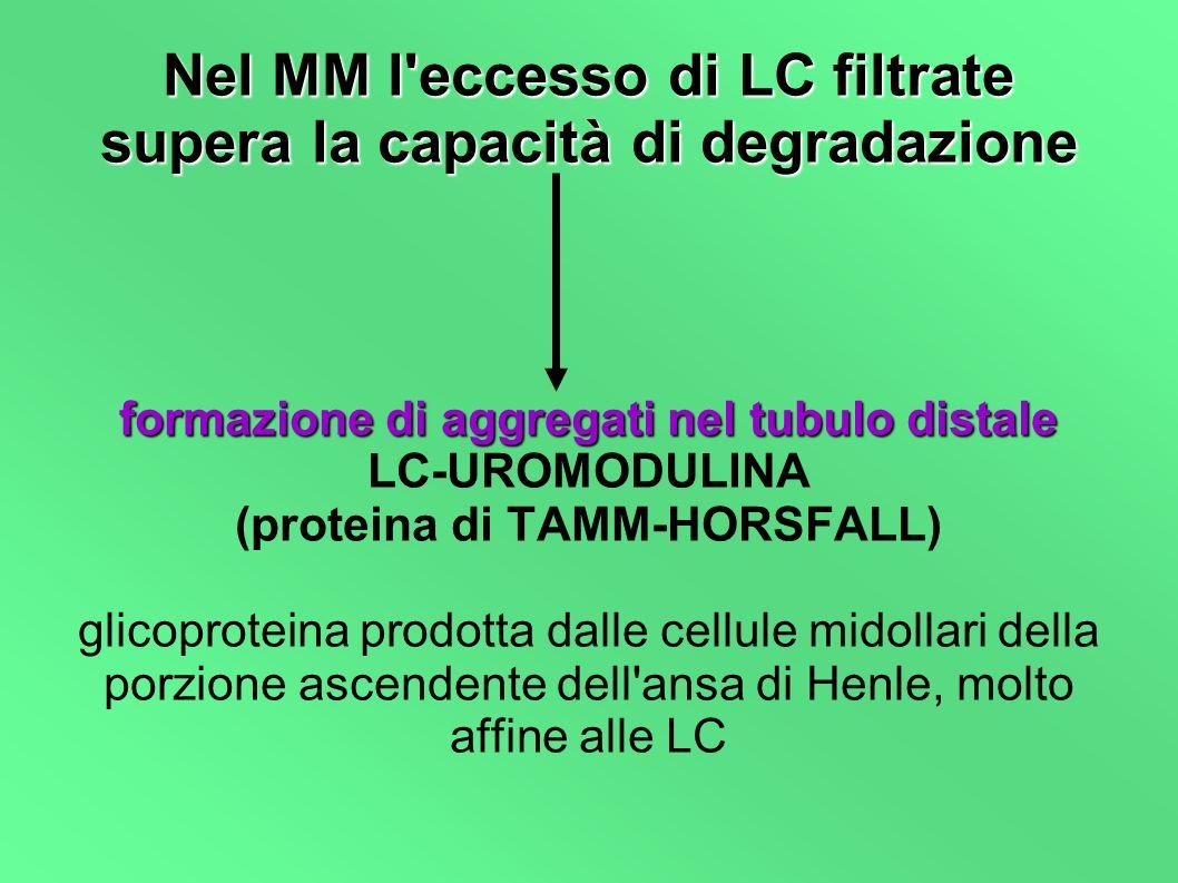 Nel MM l eccesso di LC filtrate supera la capacità di degradazione