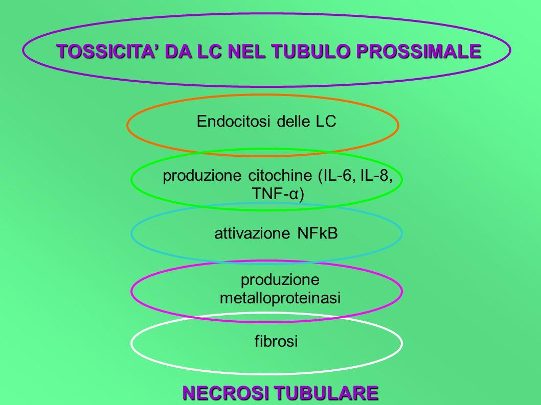 TOSSICITA' DA LC NEL TUBULO PROSSIMALE
