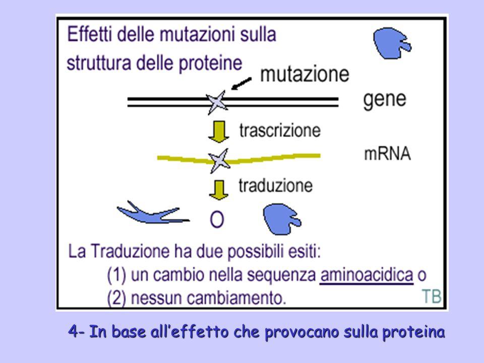 4- In base all'effetto che provocano sulla proteina