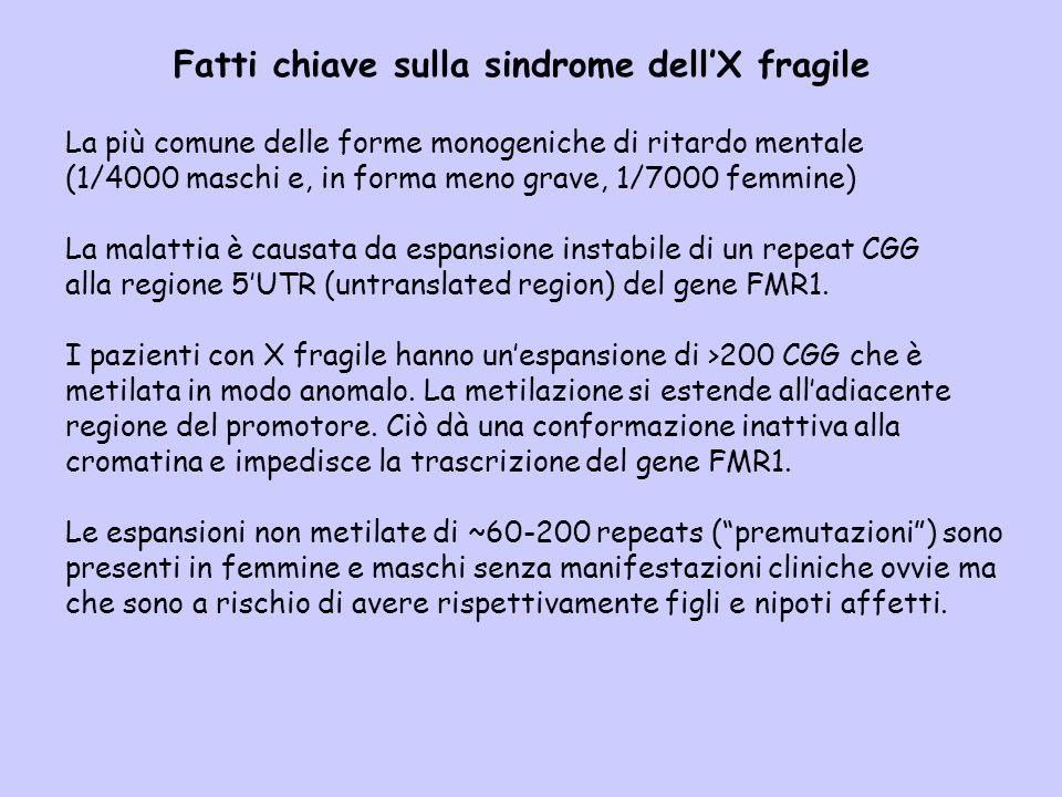 Fatti chiave sulla sindrome dell'X fragile