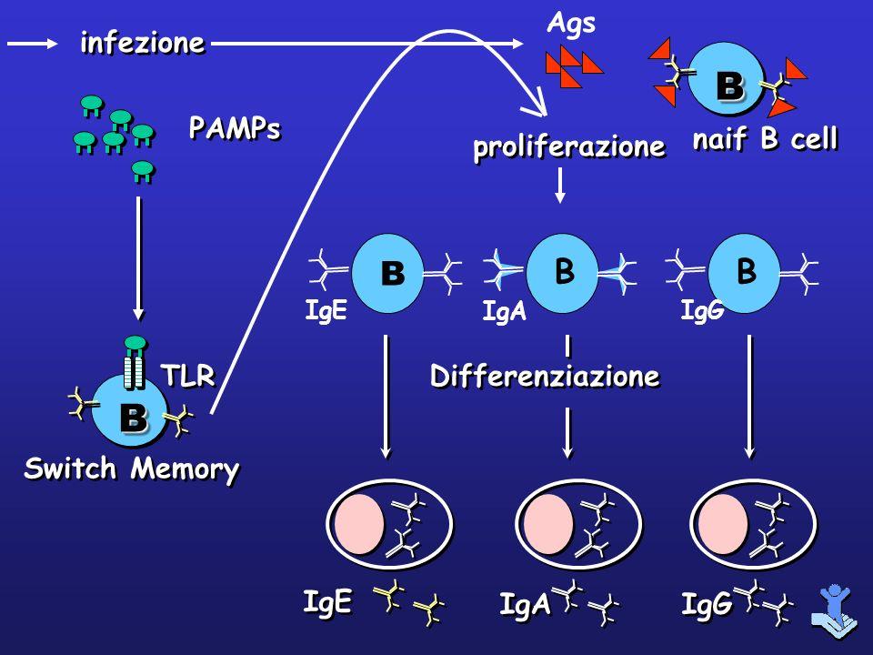 B B B Ags infezione PAMPs naif B cell proliferazione Differenziazione