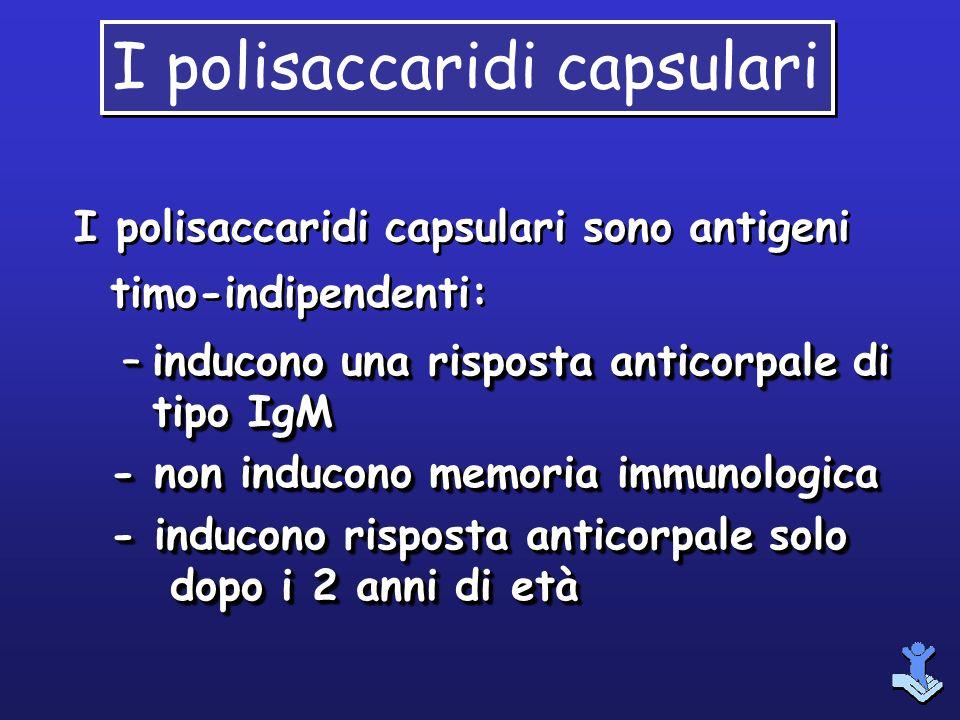 I polisaccaridi capsulari