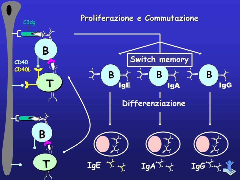 B T B T B Proliferazione e Commutazione Switch memory Differenziazione