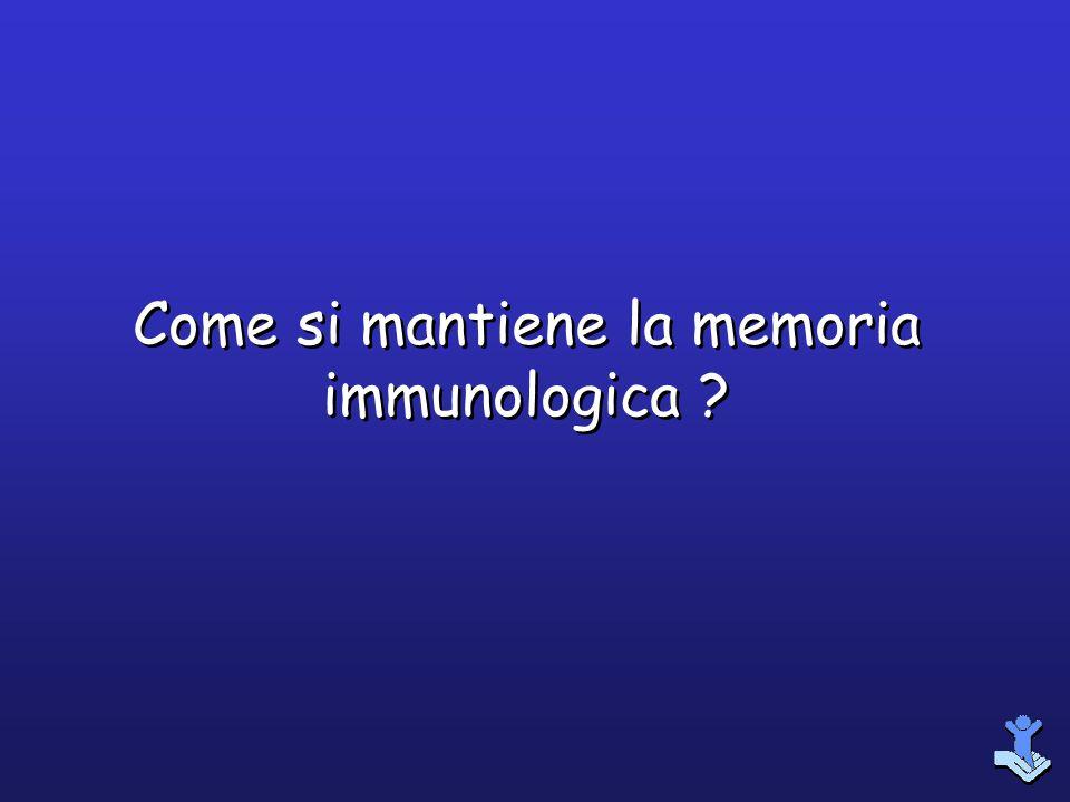 Come si mantiene la memoria immunologica
