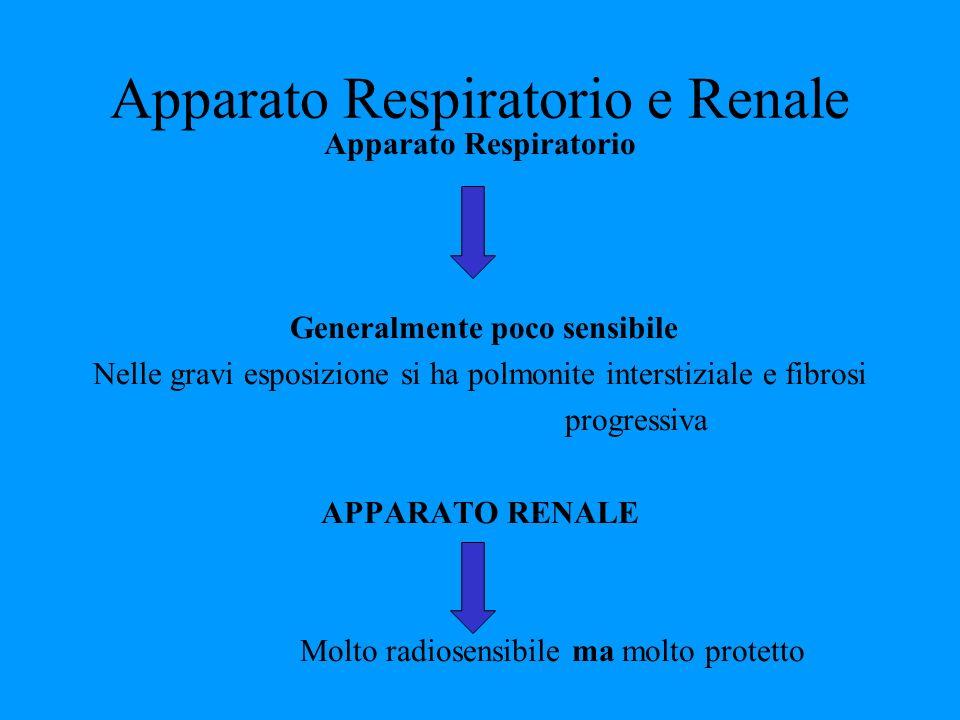 Apparato Respiratorio e Renale