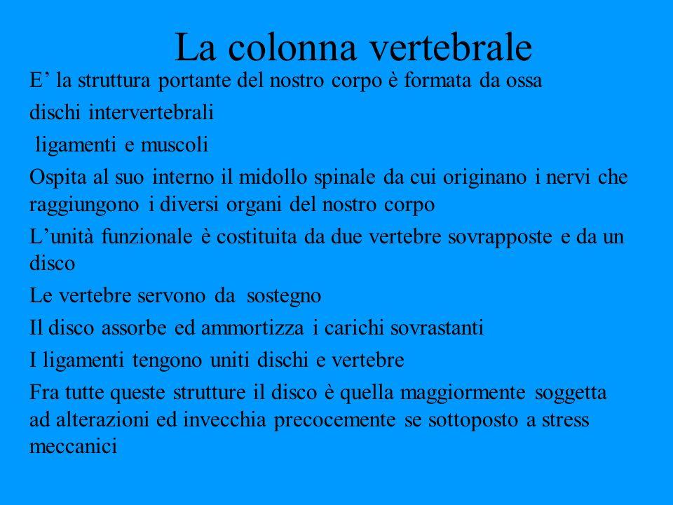 La colonna vertebrale E' la struttura portante del nostro corpo è formata da ossa. dischi intervertebrali.