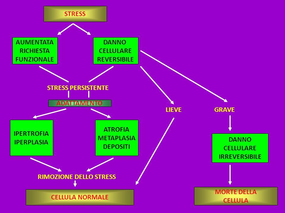 DANNO CELLULARE IRREVERSIBILE