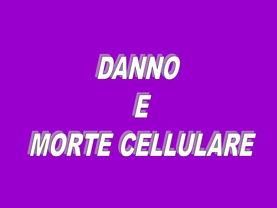 DANNO E MORTE CELLULARE