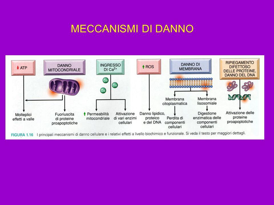 MECCANISMI DI DANNO