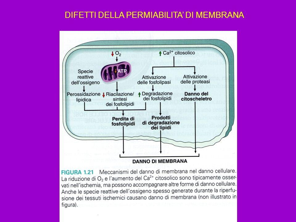 DIFETTI DELLA PERMIABILITA' DI MEMBRANA