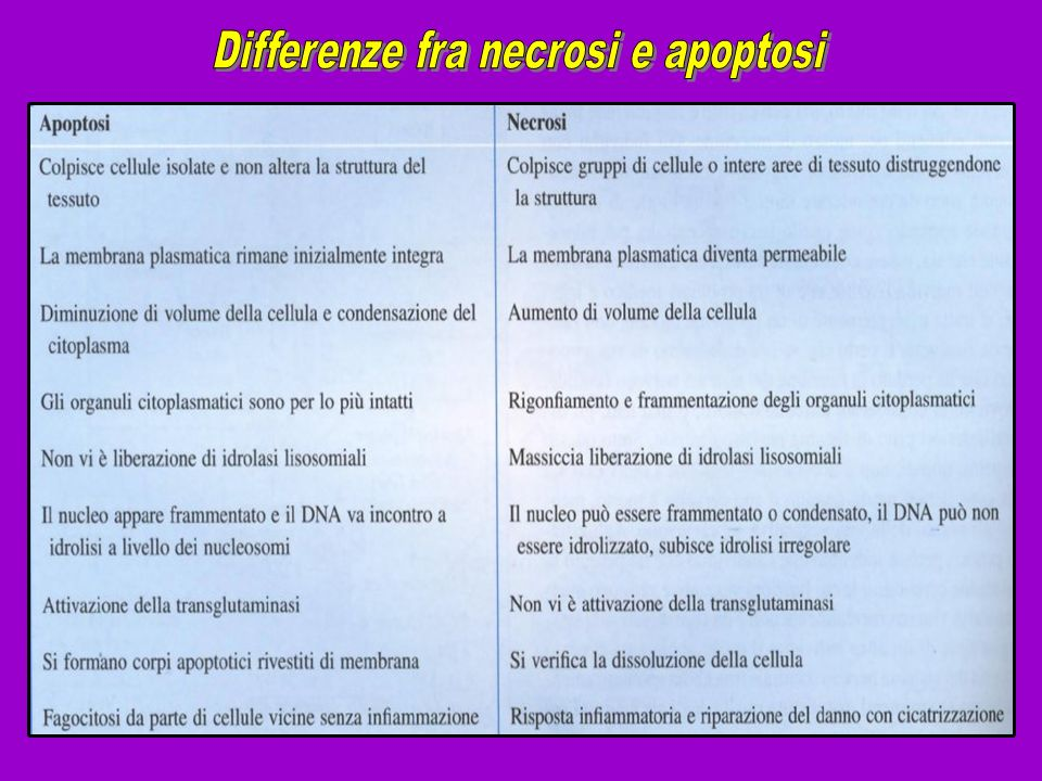 Differenze fra necrosi e apoptosi