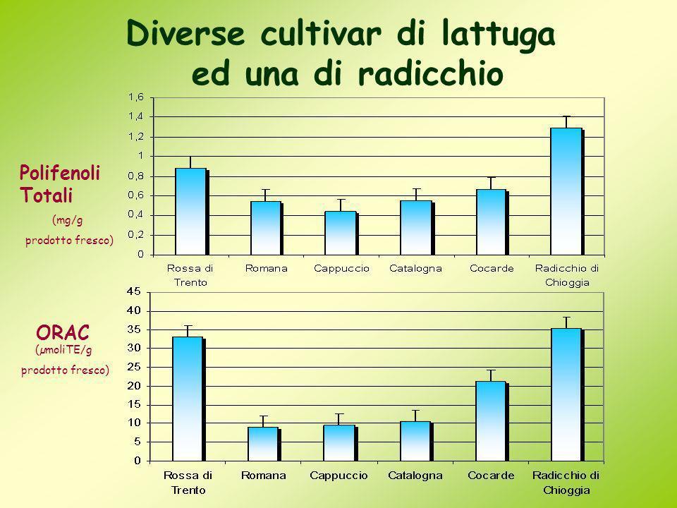 Diverse cultivar di lattuga