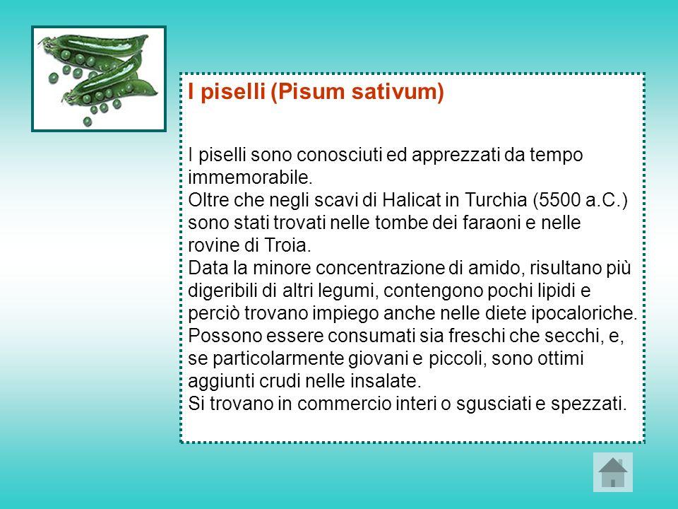 I piselli (Pisum sativum)