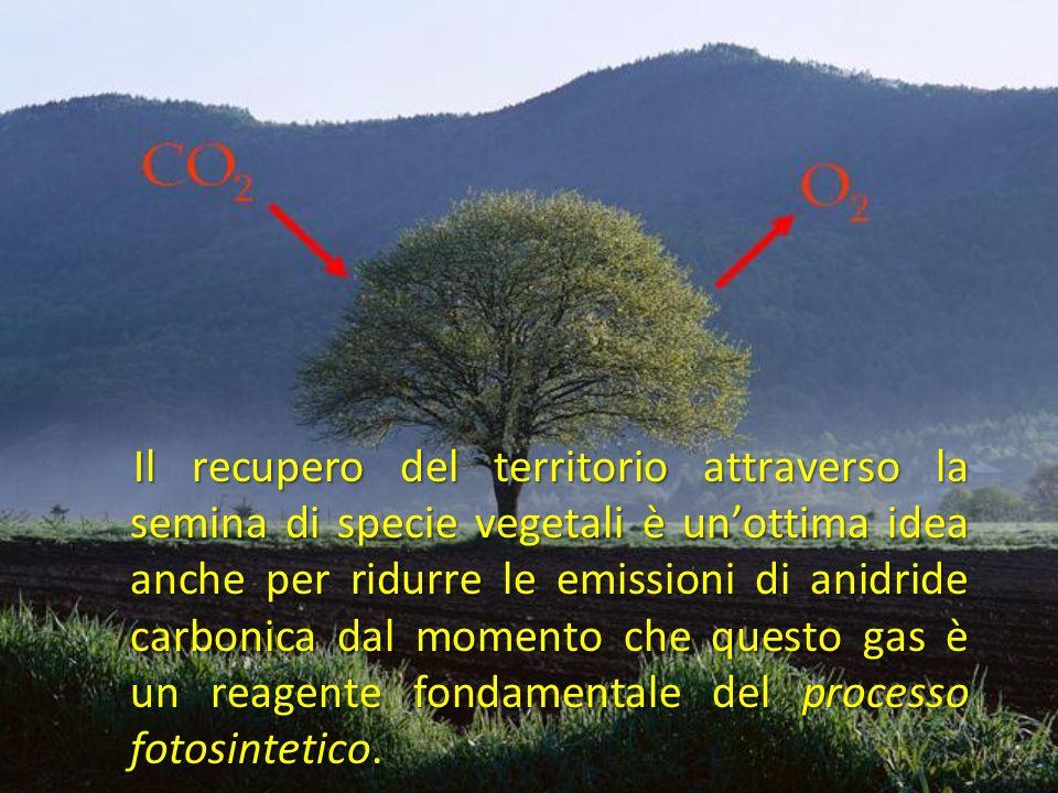 Il recupero del territorio attraverso la semina di specie vegetali è un'ottima idea anche per ridurre le emissioni di anidride carbonica dal momento che questo gas è un reagente fondamentale del processo fotosintetico.