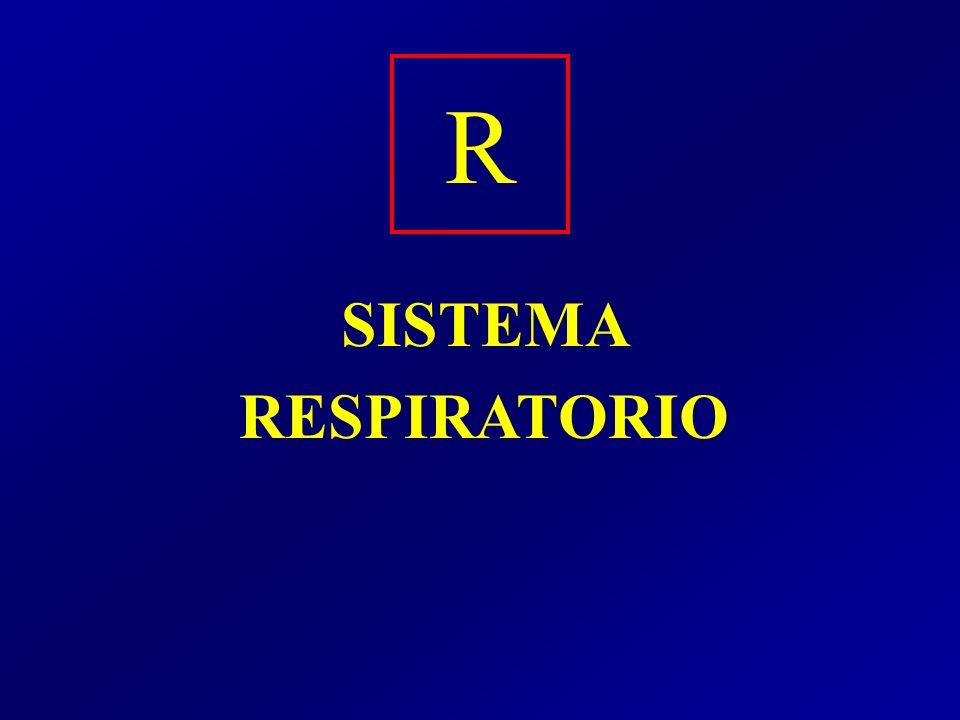 R SISTEMA RESPIRATORIO