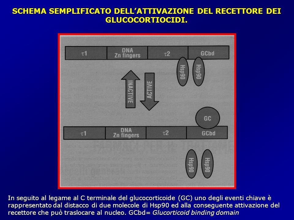 SCHEMA SEMPLIFICATO DELL'ATTIVAZIONE DEL RECETTORE DEI GLUCOCORTIOCIDI.