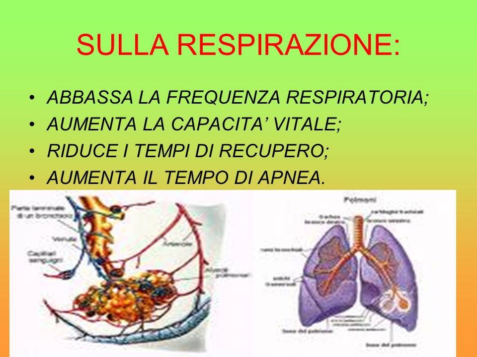 SULLA RESPIRAZIONE: ABBASSA LA FREQUENZA RESPIRATORIA;
