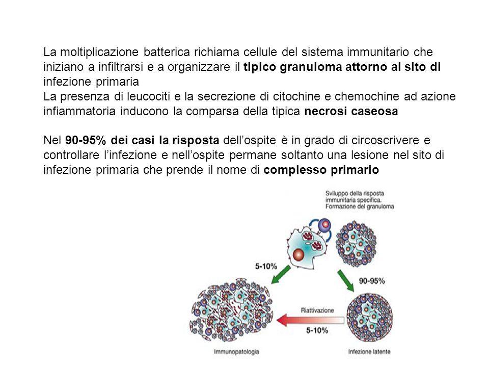 La moltiplicazione batterica richiama cellule del sistema immunitario che