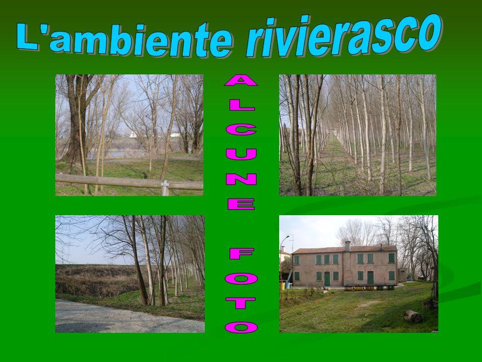 L ambiente rivierasco ALCUNE FOTO