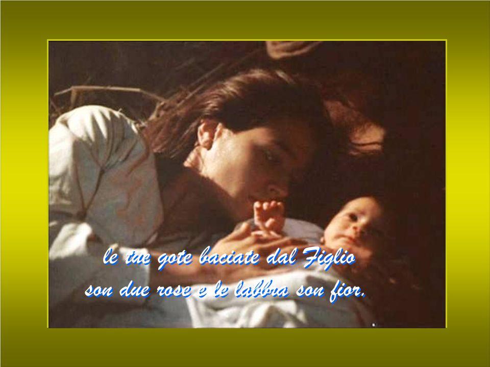 le tue gote baciate dal Figlio son due rose e le labbra son fior.