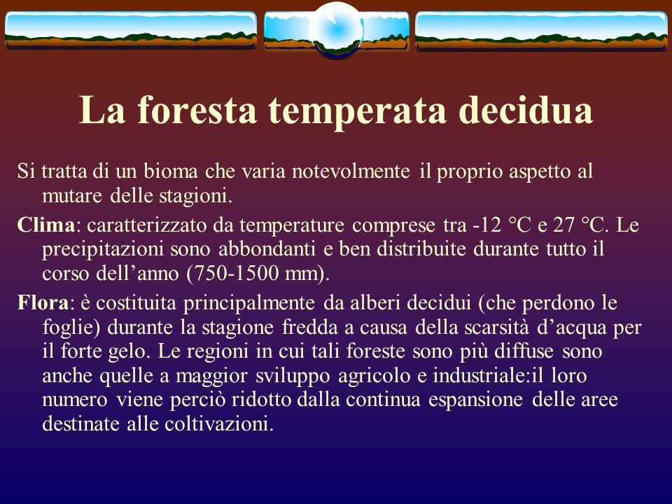 La foresta temperata decidua