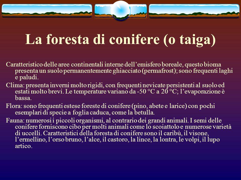 La foresta di conifere (o taiga)