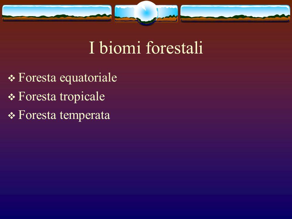 I biomi forestali Foresta equatoriale Foresta tropicale