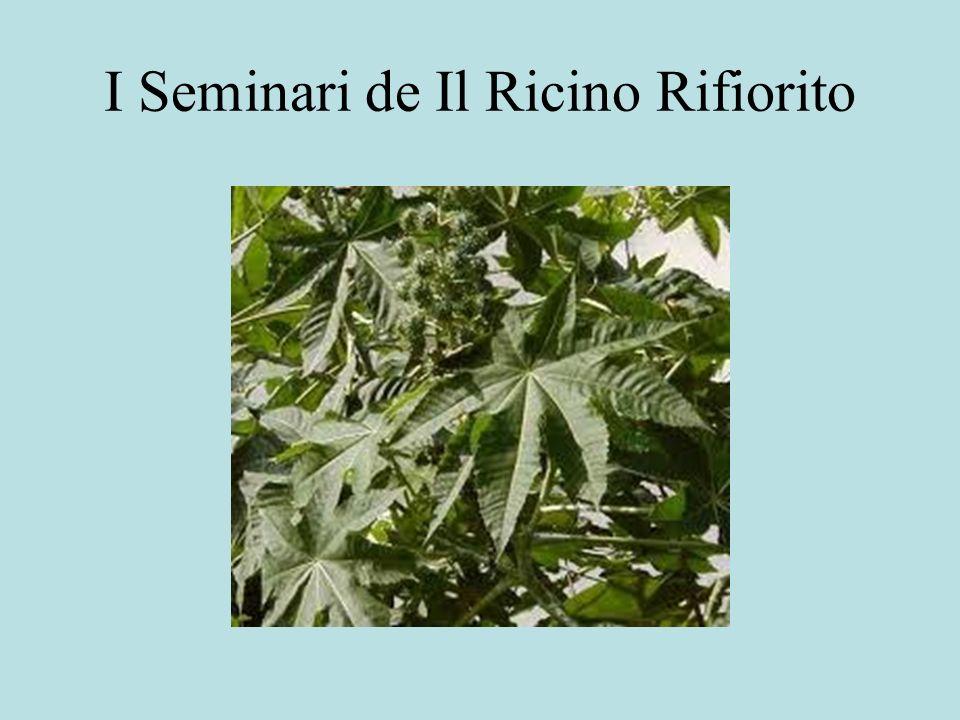 I Seminari de Il Ricino Rifiorito
