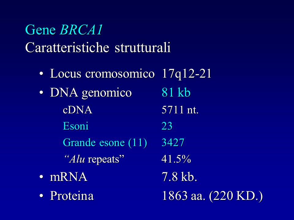 Gene BRCA1 Caratteristiche strutturali