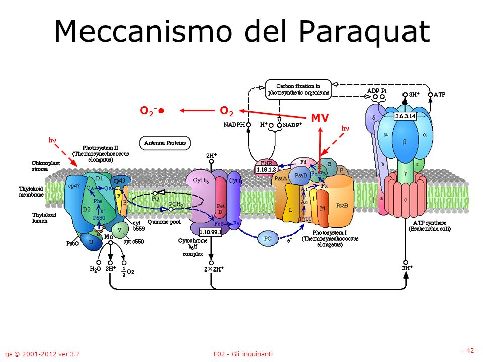 Meccanismo del Paraquat